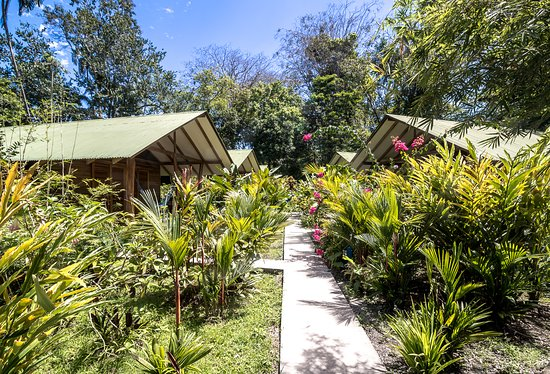 Cocles, Costa Rica: A tropical garden full of plants and flowers