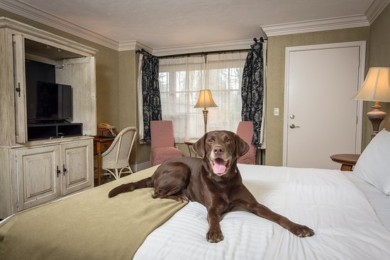 The Village Green: Pet-friendly deluxe king room