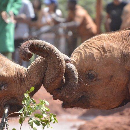 David Sheldrick Wildlife Trust : photo2.jpg