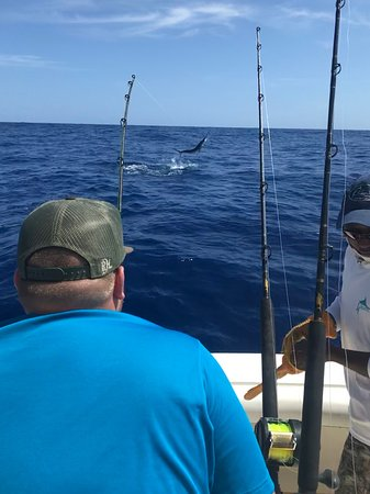 Mike's Marina Fishing Charters SRL: Fighting white marlin