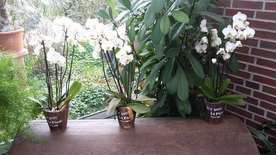 Schenefeld, Germany: Orchideen im orchideen.cafe
