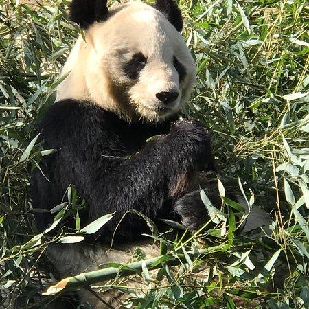 Beijing Zoo: photo4.jpg