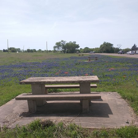Ennis, TX: Picnic tables in abundance. Great for a family outing.