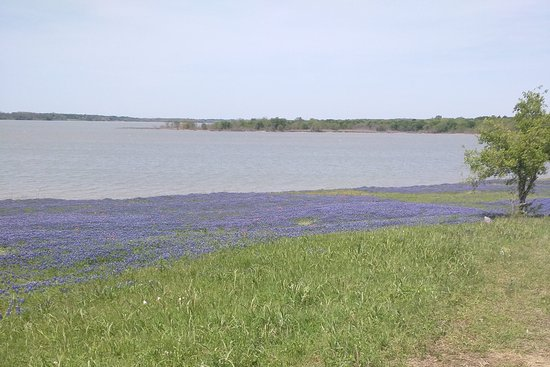 Ennis, TX: Gorgeous waterfront.