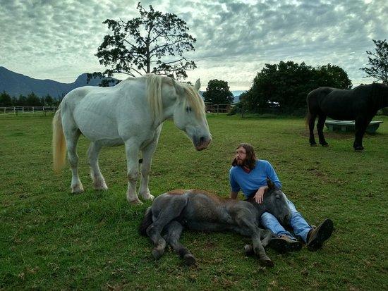 Outeniqua Moon Percheron Stud and Guest Farm: IMG_20180420_101040_HDR_large.jpg