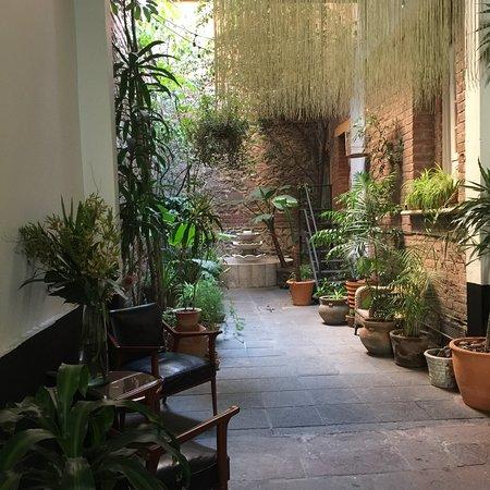 El patio 77, first eco-friendly B&B in Mexico City: photo1.jpg