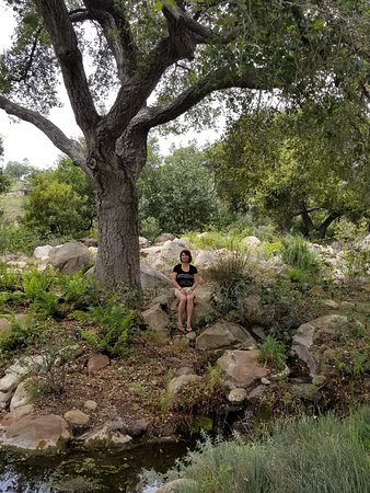 Santa Barbara Botanic Garden: Chilling by the creek