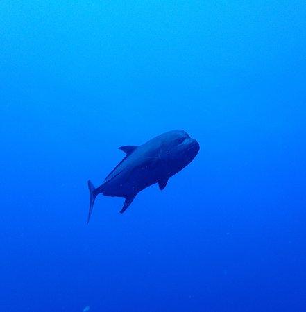 Saba Divers: Fish