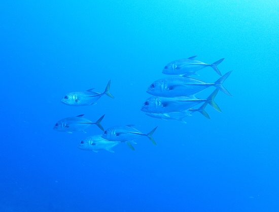 Saba Divers: Fishes