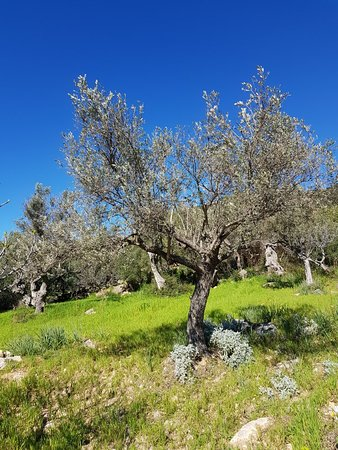 Castell d Alaro: 20180328_112459_large.jpg