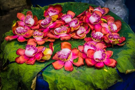 Bazaar Trail Walking Tour in George Town: Beautiful flowers at the flower market!