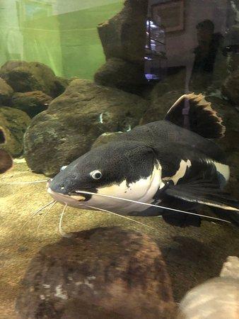 Kasumigaura Aquarium