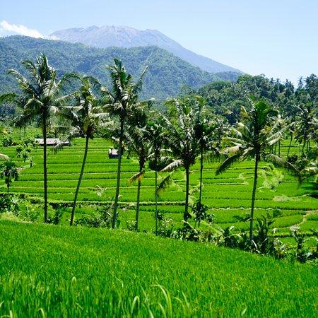 Bali Trip Driver