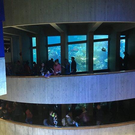 New England Aquarium (Boston) - 2018 All You Need to Know ...