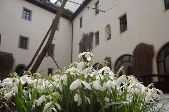 Goldegg am See, ออสเตรีย: Frühlingserwachen im Schlosshof