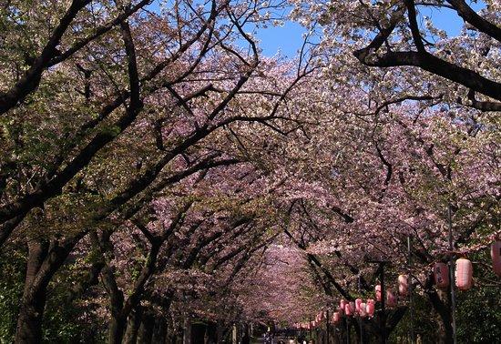 Tatsumi no Mori Ryokudo Park