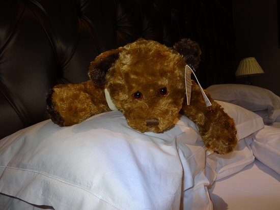 Langho, UK: Teddy is ready for a sleep