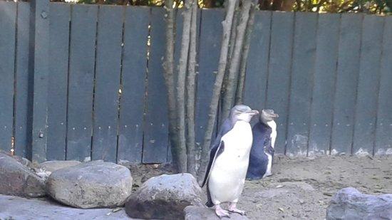 Monarch Wildlife Cruises & Tours: Penguin hospital