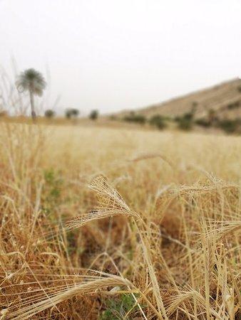 Kazerun, Iran: Bishapur