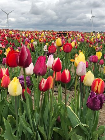 Dronten, Holandia: IMG-20180425-WA0019_large.jpg