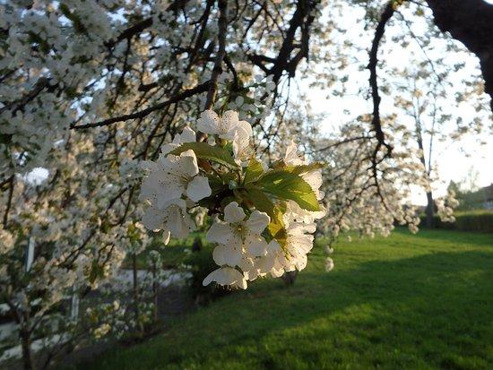 Olbersdorf, เยอรมนี: Der Frühling war voll entfaltet !!!
