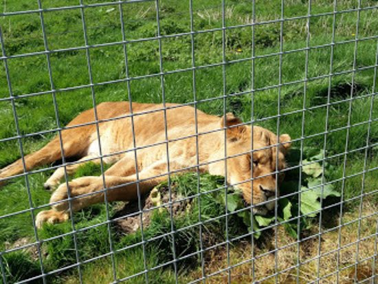 Borth Wild Animal Kingdom: Feeling tired!