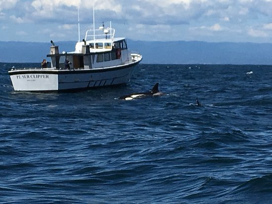 Monterey Bay Whale Watch Tour: Killer whales