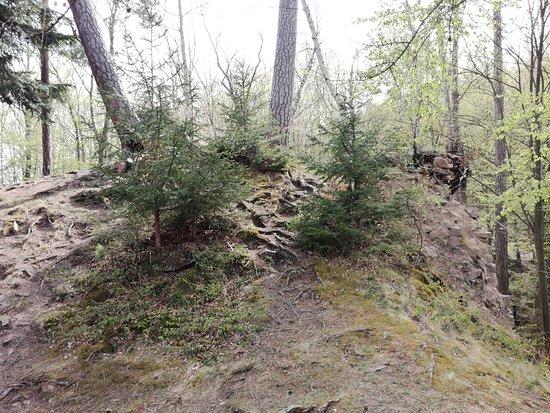 Nasavrky, Czech Republic: Trees grow everywhere.