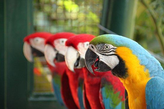 RioZoo - Rio de Janeiro's Zoo