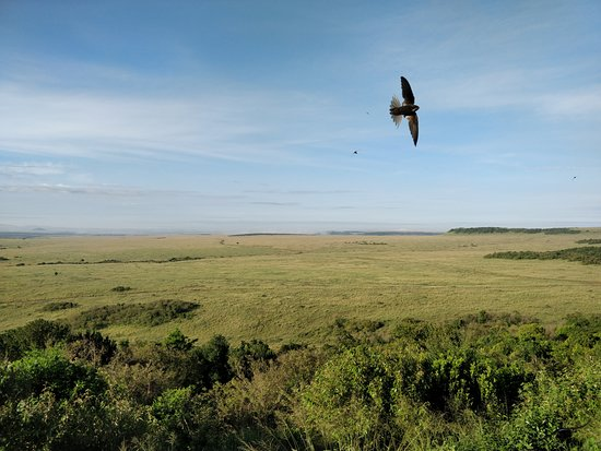 Mara Serena Safari Lodge: Birds flying around in the morning, the view from the room