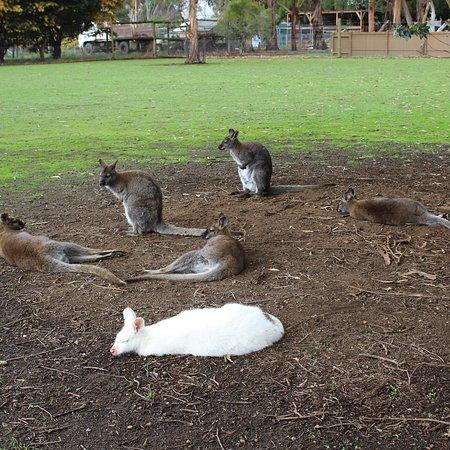 Seddon, Australia: photo7.jpg