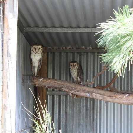 Seddon, Australia: photo8.jpg