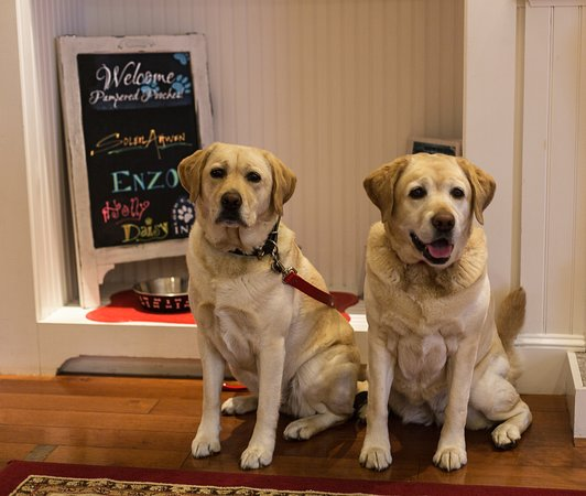 Thank you for being so welcoming of dogs, Lord Camden Inn!
