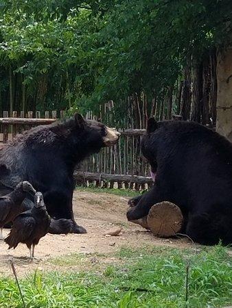 Cameron Park Zoo: 20180425_151810_large.jpg