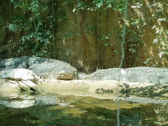 Cameron Park Zoo: 20180425_151224_large.jpg