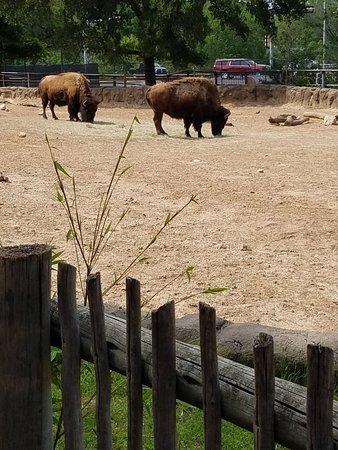 Cameron Park Zoo: 20180425_153711_large.jpg