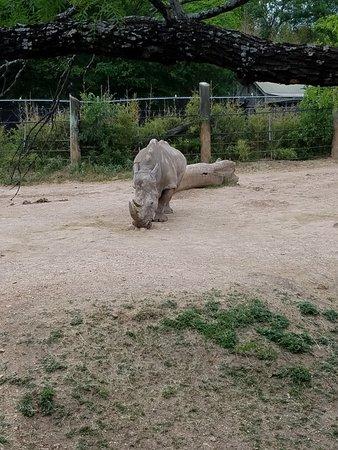 Cameron Park Zoo: 20180425_160349_large.jpg