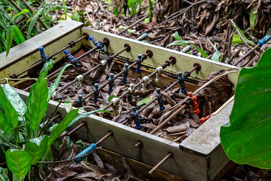 Santiago de Puriscal, คอสตาริกา: Rain forest reclaims an old foosball table