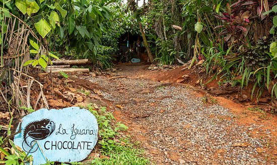 Santiago de Puriscal, Costa Rica: La Iguana Chocolate