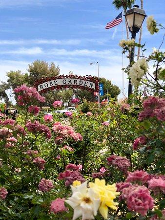 rose garden  mesa community college