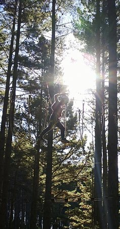 Tree Adventures Photo