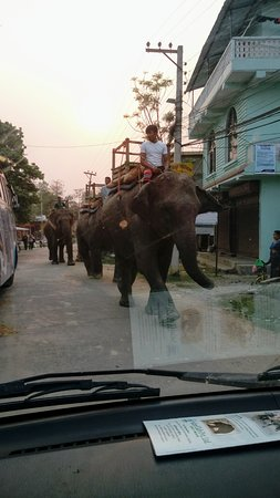 Chitwan District, Nepal: Street with elephants