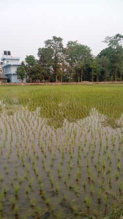 Chitwan District, Nepal: Water plants