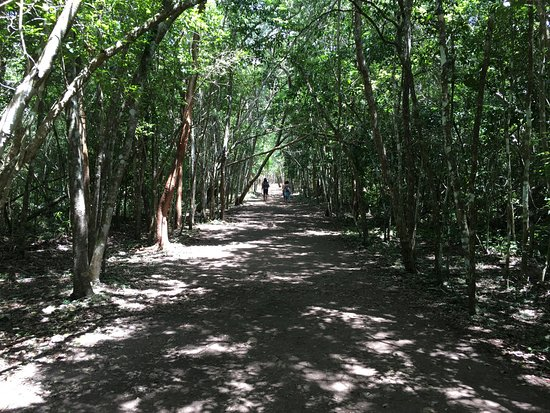 Ruinas de Coba: Caminos