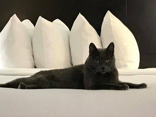 Lanham, MD: The Cat Approves