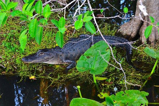 Florida City, FL: Everglades