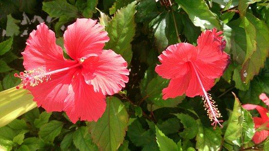 Cocos Island, Mariana Islands: DSC_0367_1_large.jpg