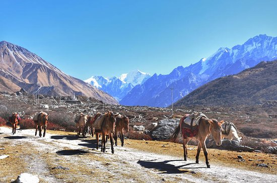 6 Nights amazing Langtang Valley...