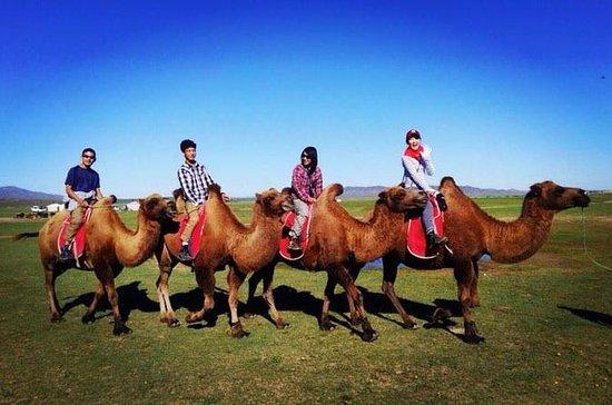 Erleben Sie die Mongolei in 20 Tagen