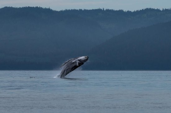 Hoonah Whale Tours